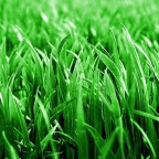 The Green Grass Grew All Around