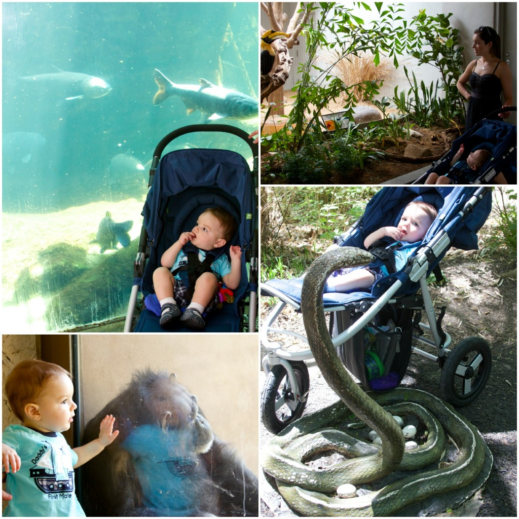 First Trip to the St. Louis Zoo