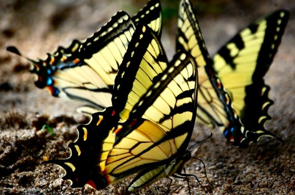 Caterpillar Walks Around | Caterpillar Into Butterfly Song | Listen & Learn Music